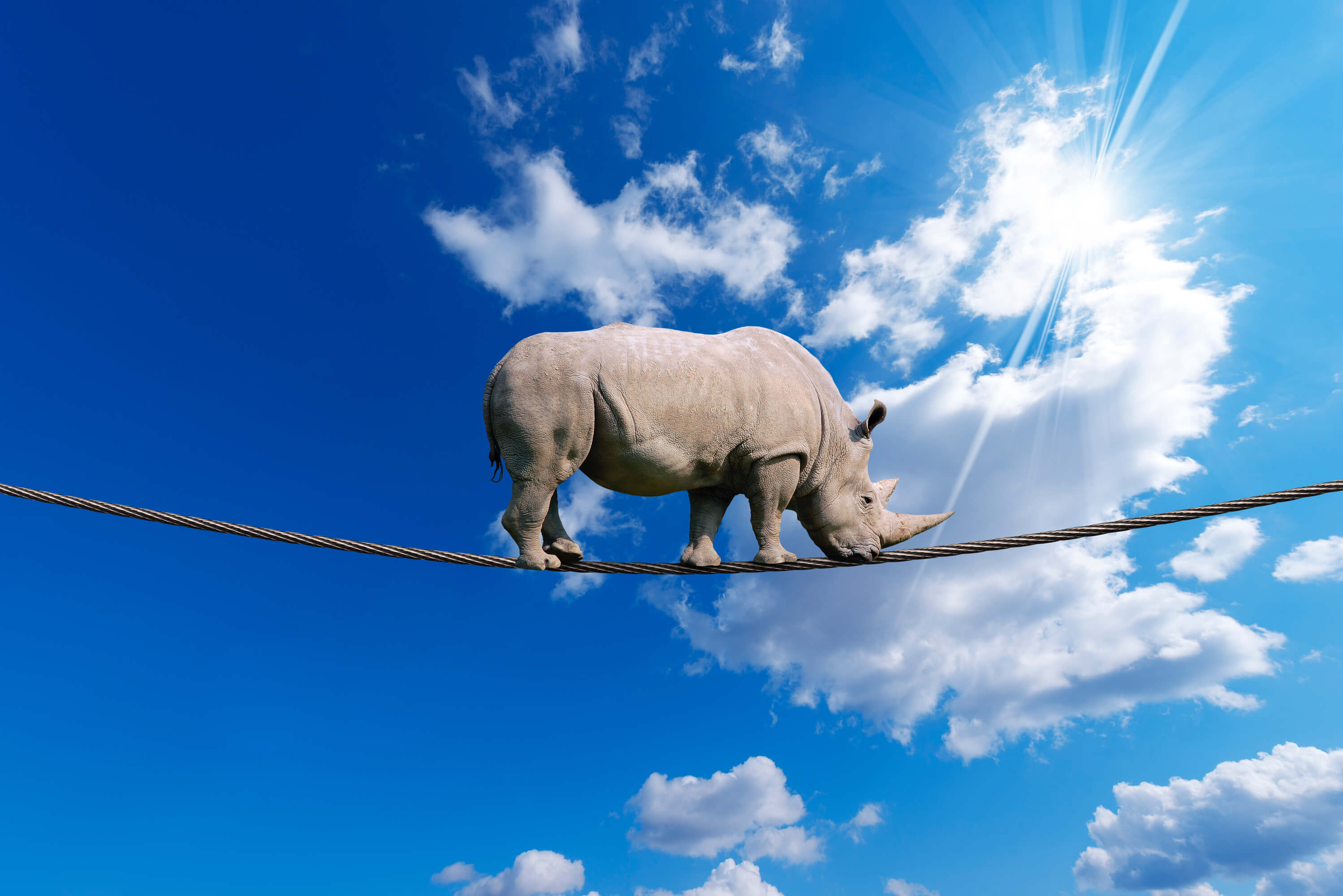 Image of Rhino on a rope